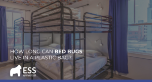 How Long Can Bed Bugs Live in a Plastic Bag?