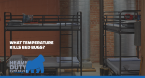 What Temperature Kills Bed Bugs?