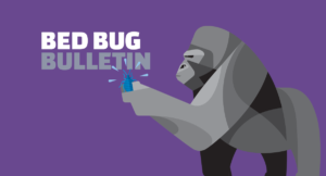 A Quick Guide to Controlling Bed Bugs in College Dorms