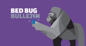 Do Bed Bugs Hibernate in Winter Months?